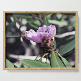 Rhododendren in bloom Serving Tray
