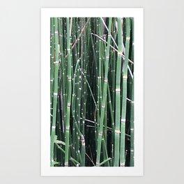 bamboozled Art Print