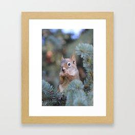 Mr. Squirrel ~ I Framed Art Print