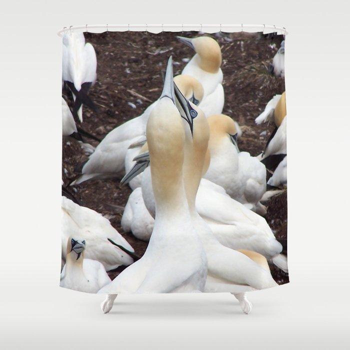 Northern gannet embrace Shower Curtain
