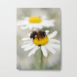 Biene auf der Kamille Wiese Metal Print