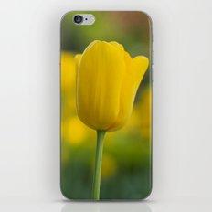 Yellow Tulip iPhone & iPod Skin