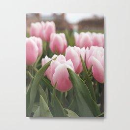 Pink tulips in front of het Rijksmuseum in Amsterdam Metal Print