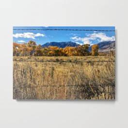 Barbed wire & Autumn Trees Metal Print