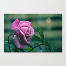 Rose misses countryside Canvas Print