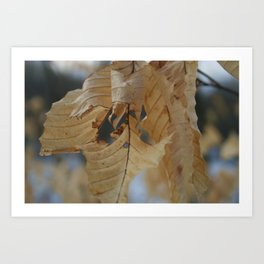 Winter Leaf Art Print