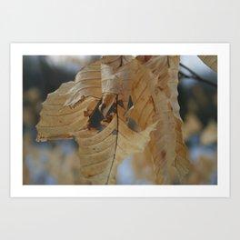 Winter Leaf Art Print