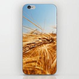 treasures of summer iPhone Skin