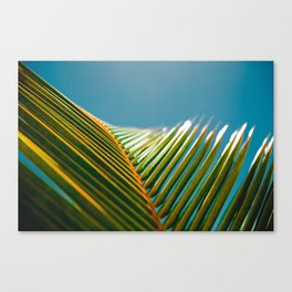 green and turquoise Canvas Print