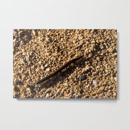Millipede Metal Print