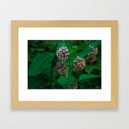 Borden Mt Framed Art Print