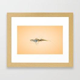 AE2/05 Framed Art Print