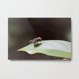 Blue Fly Metal Print