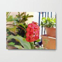 Apulian flower Metal Print