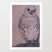 Curious Bird Art Print