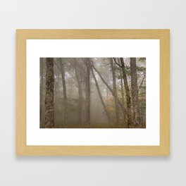 Misty Spruce Knob Forest Framed Art Print