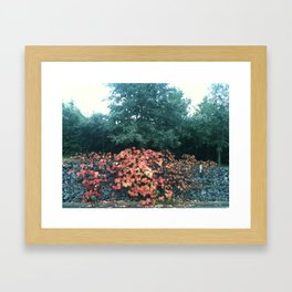 As autumn shows its face Framed Art Print