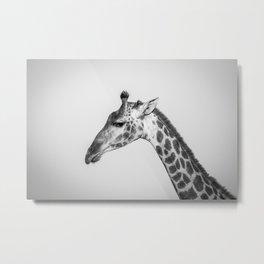 Chrome Giraffe Metal Print