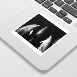 Black and white dolphins Sticker