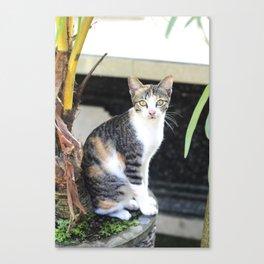 Cat In Bali Canvas Print