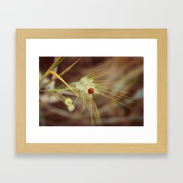 Ladybug on wheat Framed Art Print