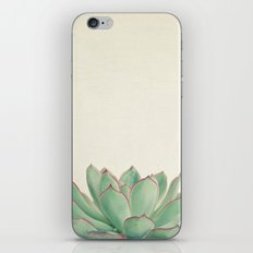 Echeveria iPhone & iPod Skin