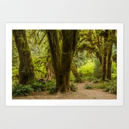 Hall of mosses Art Print