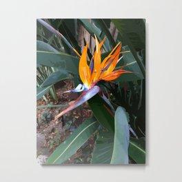 Bird of Paradise Flower Painted Photograph Metal Print