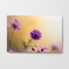 Dreamy flowers bathed in soft whispery light Metal Print