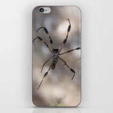 Spider 1 | Picture A iPhone & iPod Skin