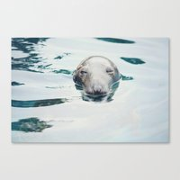 seal Canvas Prints featuring Seal by betweenthebookpages