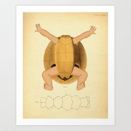 Anatomical Turtle Baby Art Print