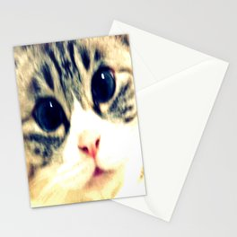 My name is chill of pink nose and blue eyes. I Love Cat. (Clear) Stationery Cards