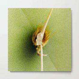 Englemann's Prickly Pear Spine Metal Print