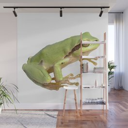 European Tree Frog Wall Mural