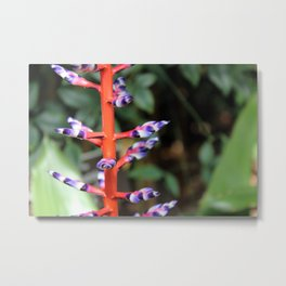 Detail of Bromeliad Plant Metal Print