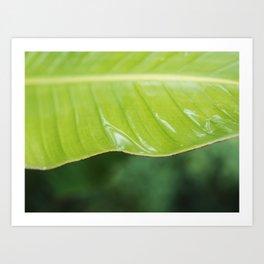 Wet Plants I Art Print