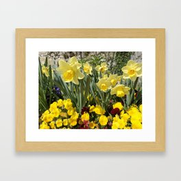 Floral Spring Garden with Daffodils and Pansies Framed Art Print