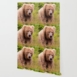 Brown Bear Kodiak Wallpaper