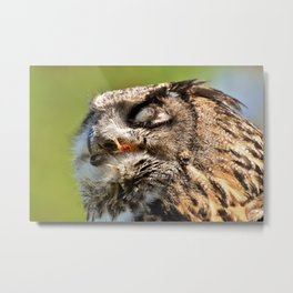 Eagle Owl Head Closeup Metal Print