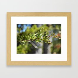 boquet of bokeh Framed Art Print