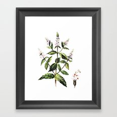 watercolor peppermint Framed Art Print