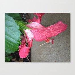 Pink Belle Canvas Print