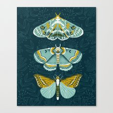Lepidoptery No. 8 by Andrea Lauren  Canvas Print