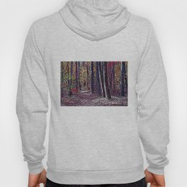 FOREST TRAIL THROUGH FALL COLORS Hoody