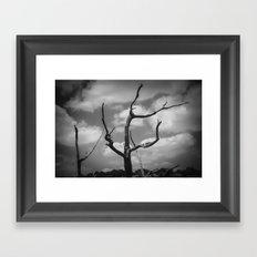 Lone Tree III Framed Art Print