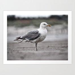 Gull in the rain Art Print