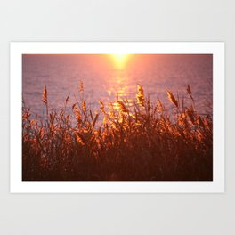 Lake sunset Art Print