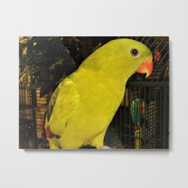 Rock Pebbler Metal Print