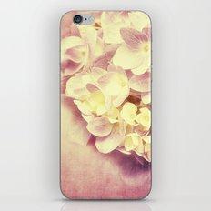 HYDRANGEA IN VANILLA AND PINK iPhone & iPod Skin